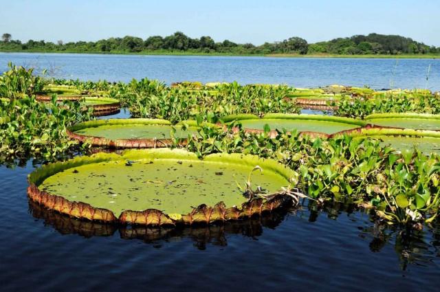 Falta de saneamento e desmatamento comprometem as águas pantaneiras